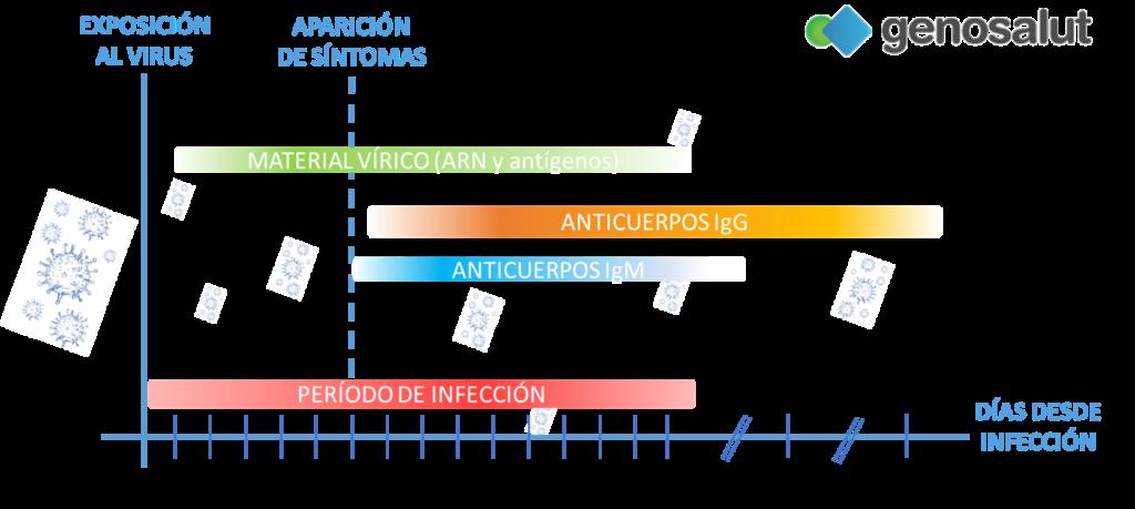 Infección y respuesta inmunitaria frente al coronavirus, causante de COVID-19